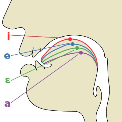 A-E-Y balsių anatomija